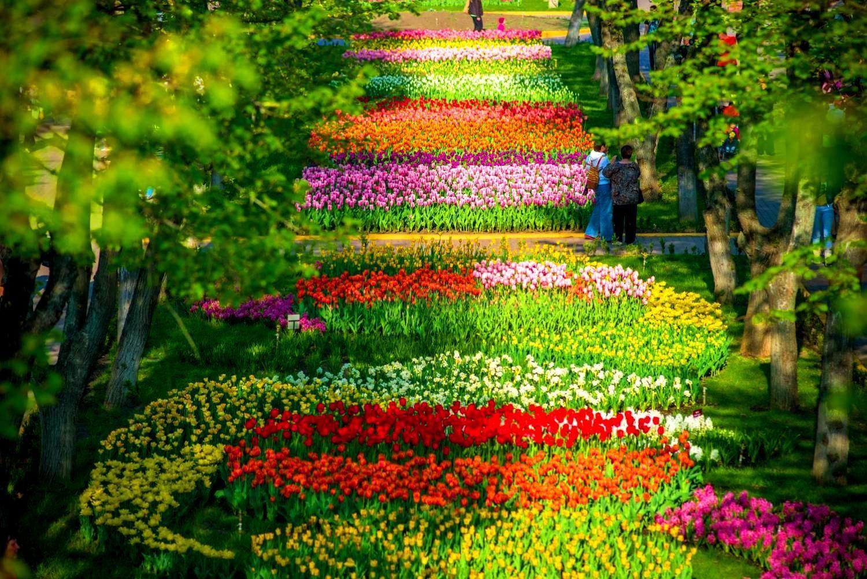 де знайти тюльпанові поля в україні
