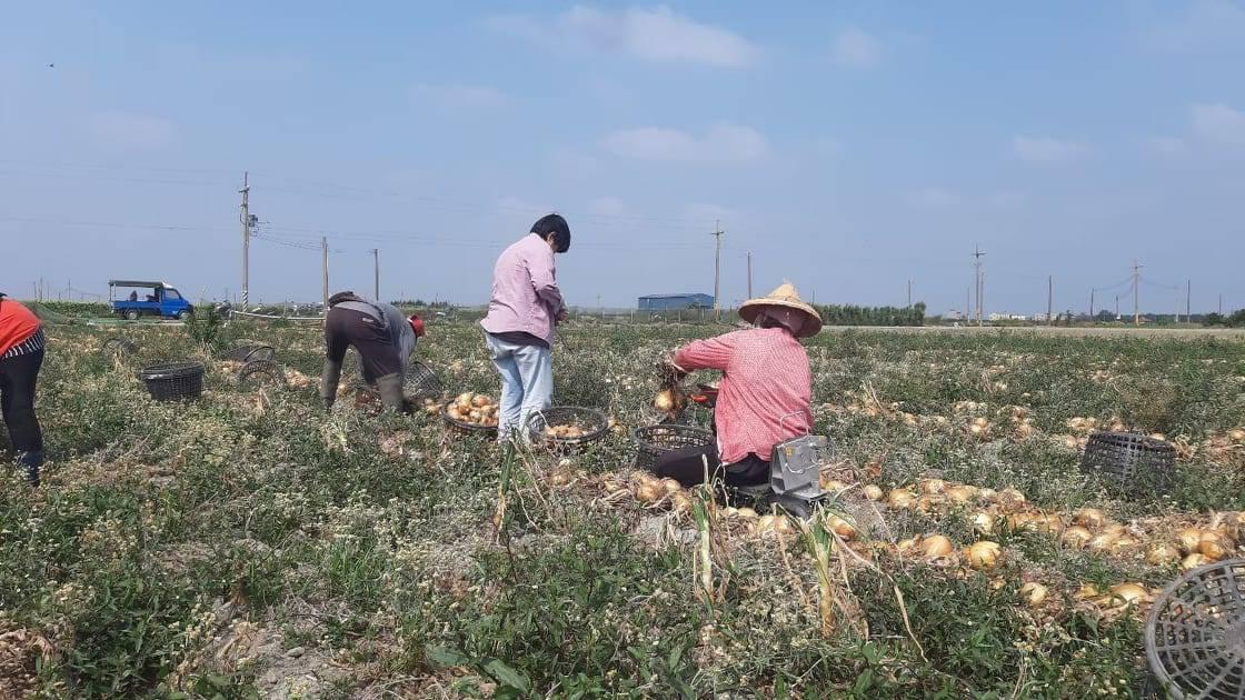讓交工更進化的新型農業生產合作社