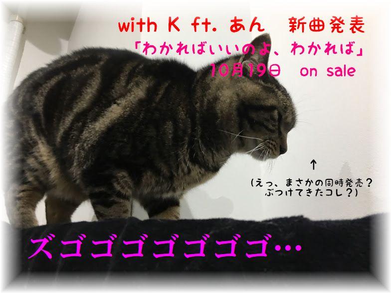 猫の多頭飼いのメリット・デメリットって?