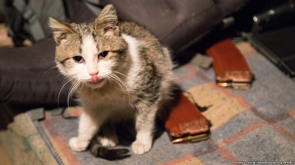 Кіт снайперів морпіхів на ім'я Кіт показує мені язика :)