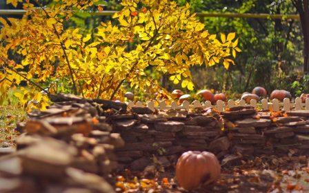 Посадка деревьев в начале осени