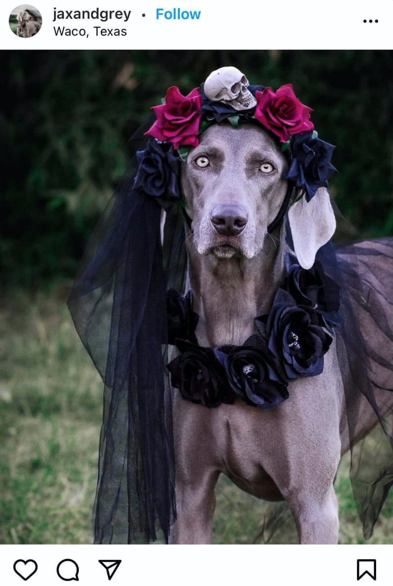 Halloween Costume Ideas For Dogs Day of the Dead