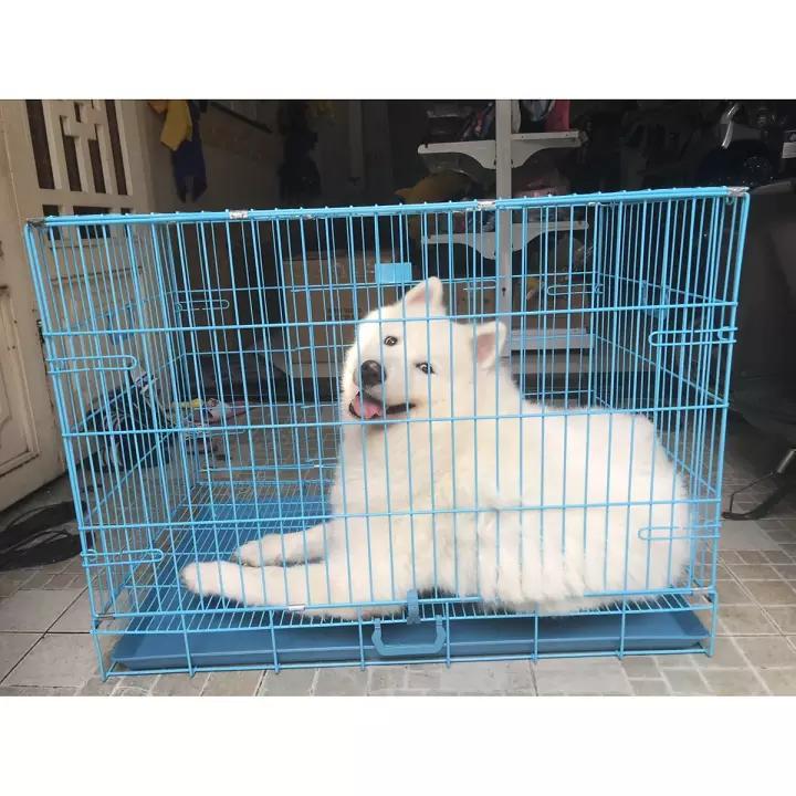 Cách chọn mua chuồng chó tốt nhất 2020: giúp chủ nuôi nhốt tại nhà?