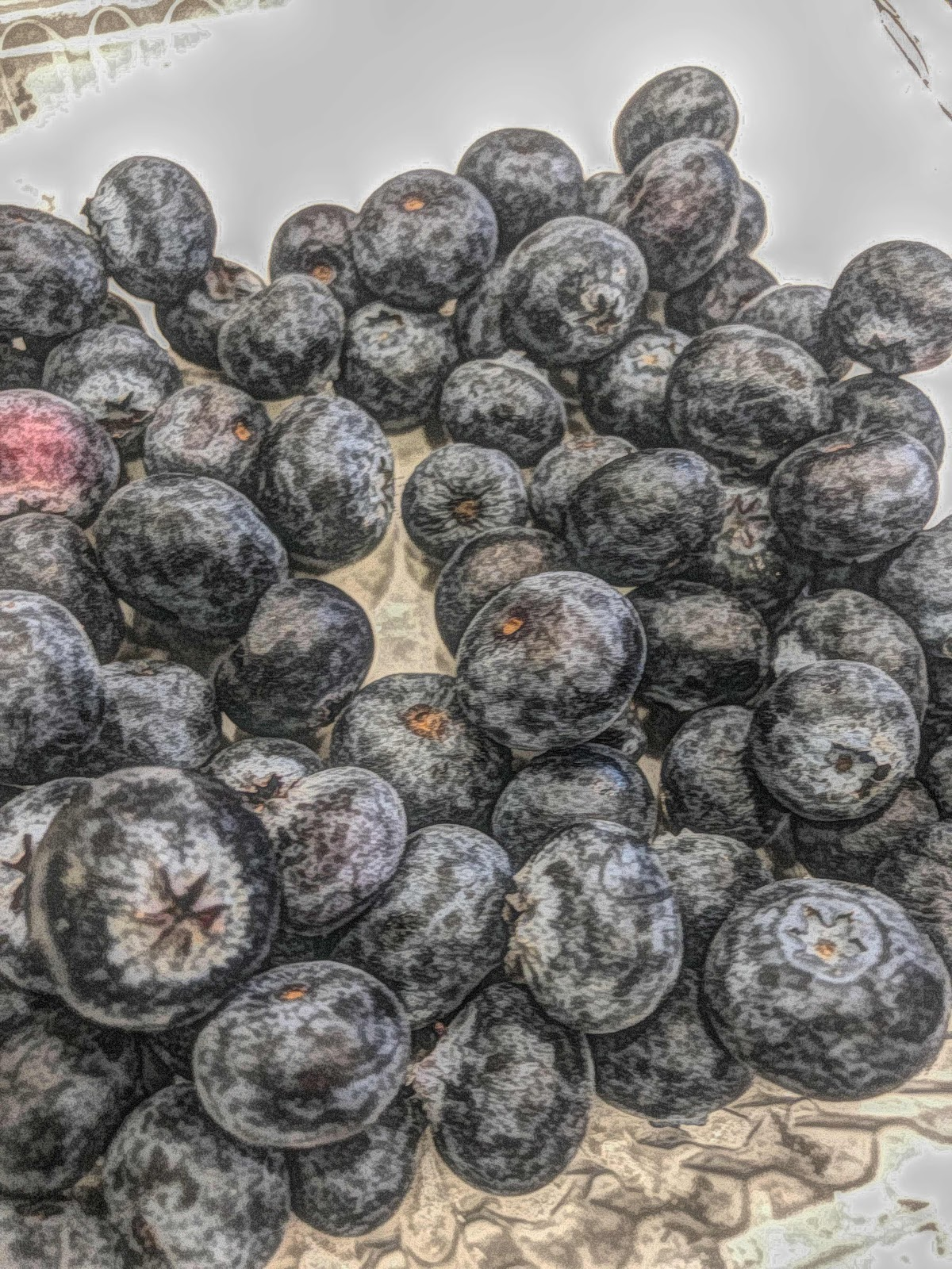 Blueberries free picture