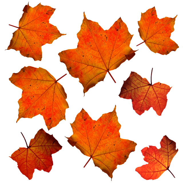 Fall, Leaves, Leaf, Isolated,
