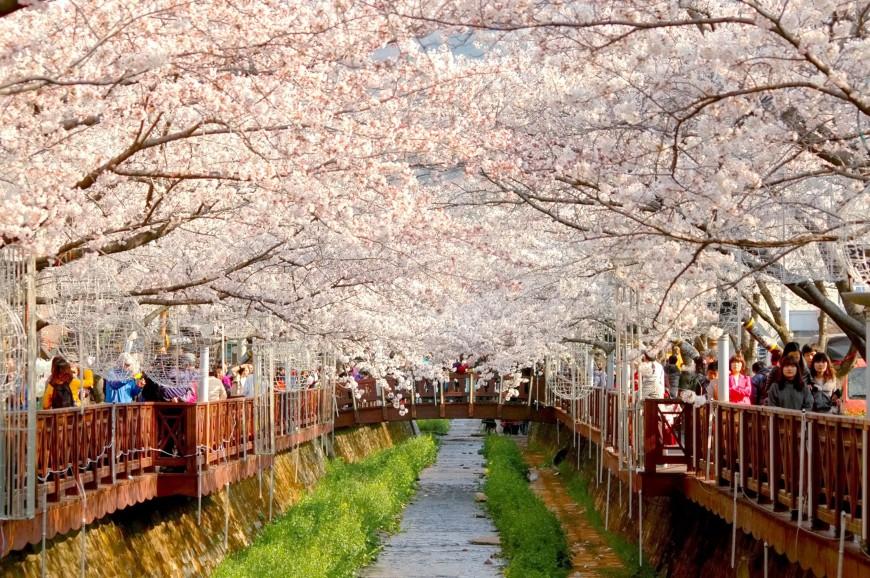Thưởng thức mùa xuân Hàn Quốc