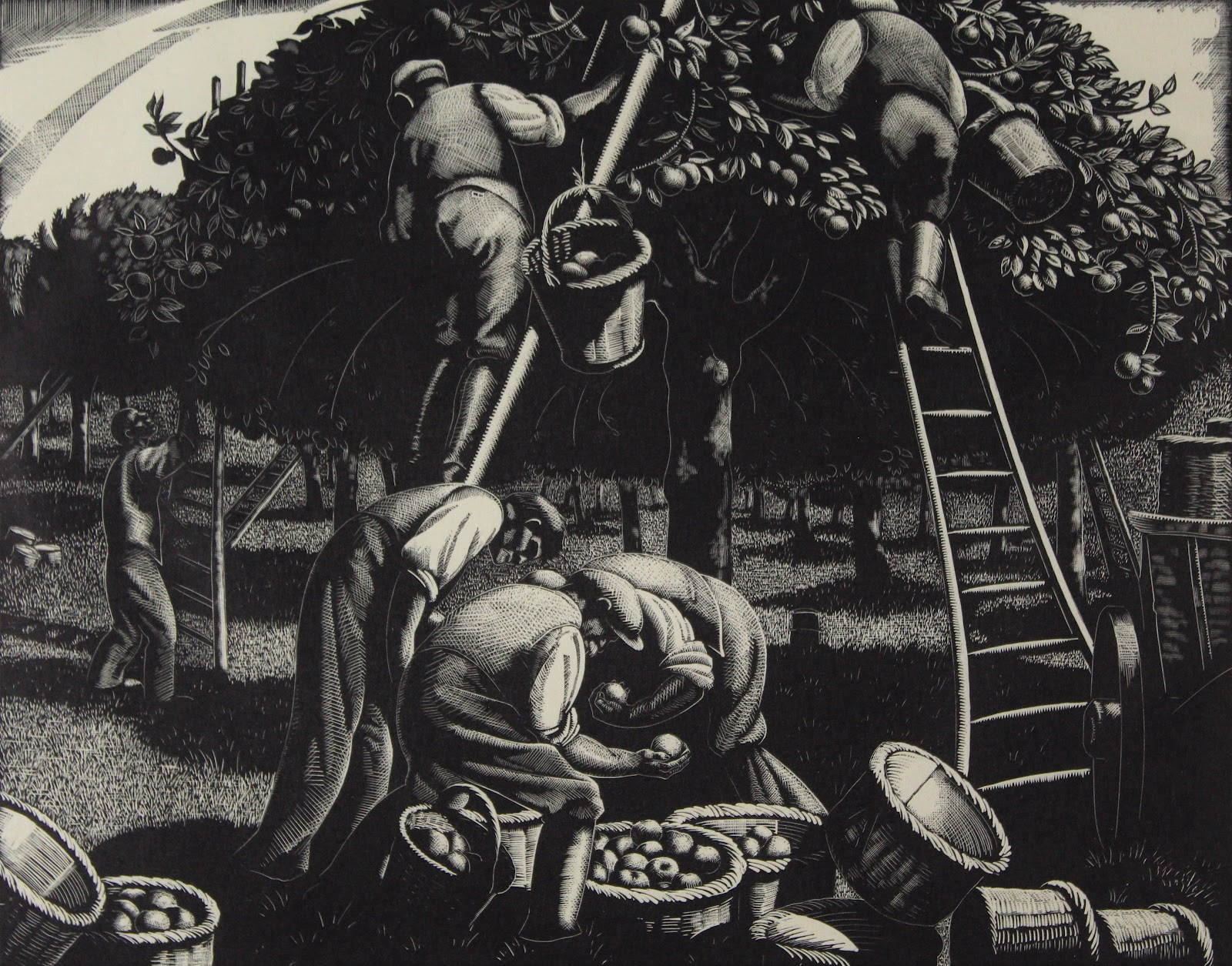 A wood engraving on paper of men picking apples. Two stand on their own ladders, picking apples off the tree. In the foreground, men are piling the apples into larger baskets, while other baskets lay empty to the side. The grove of trees extend into the distance under a light sky.