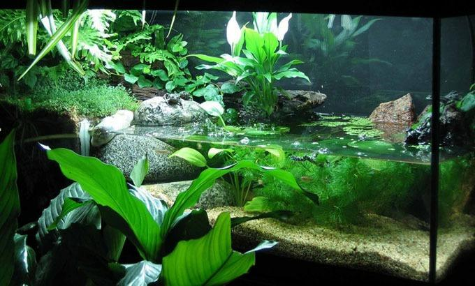http://d2a5vhda9v4n4x.cloudfront.net/wp-content/uploads/2019/03/fire-bellied-toad-habitat.jpg