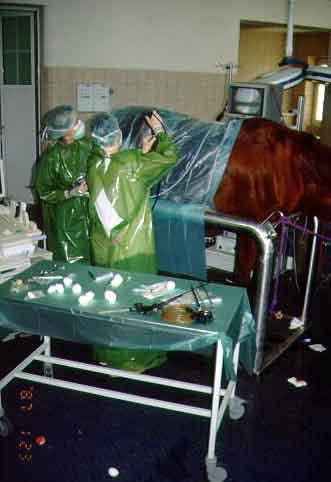 Cirugía laparoscópica en un equino en estación, sedado con detomidina y metadona. Depto de Cirugía de Grandes Animales. Facultad de Medicina Veterinaria. Leipzig Alemania.