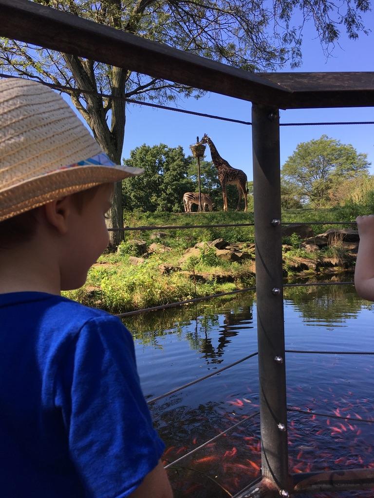 toddler-boy-enjoying-the-zoo