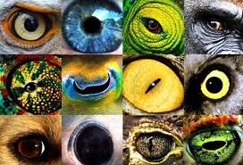 MorgansLists: 10 Examples of How Animals See - Images That Show Us ...