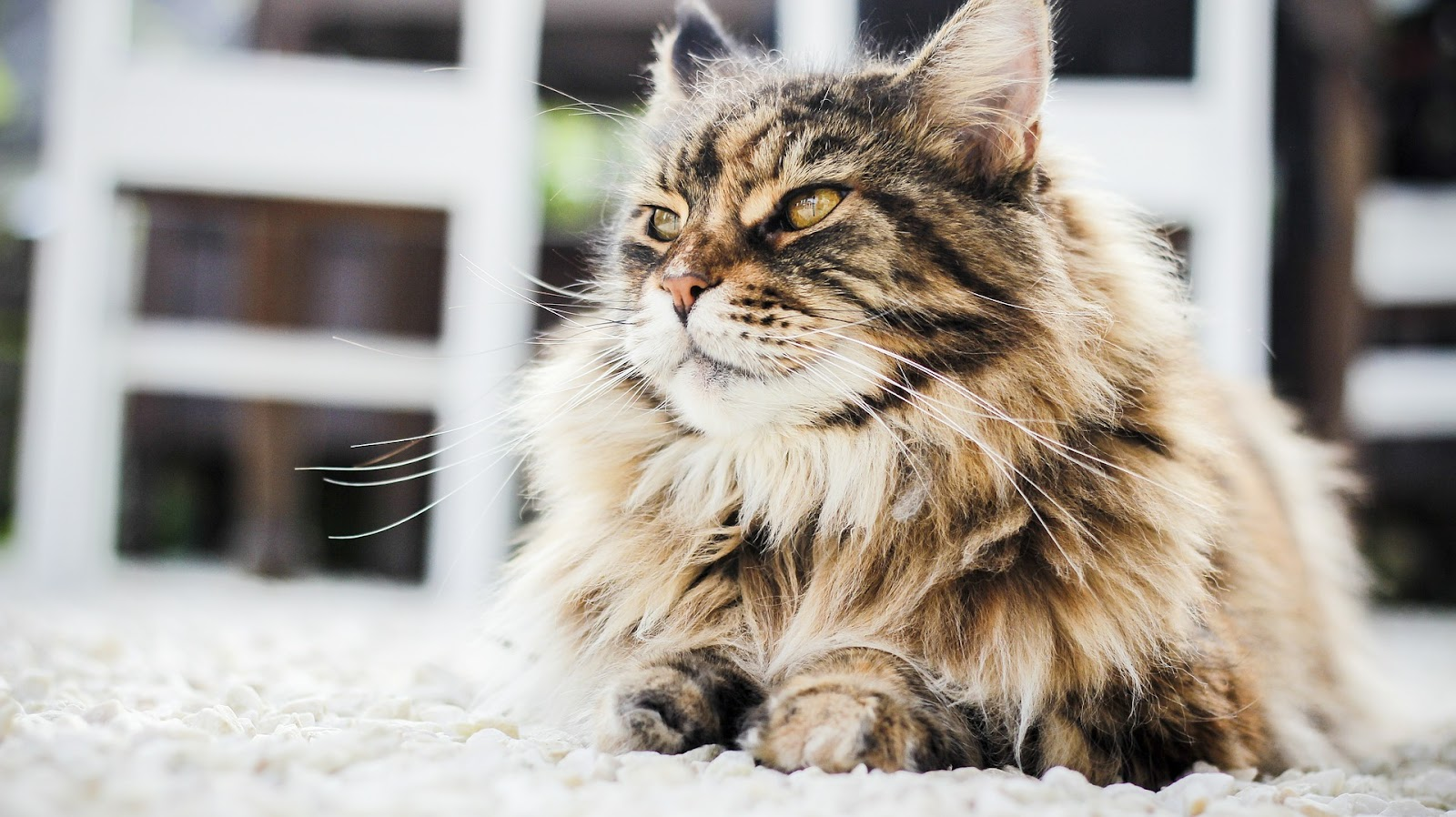 zadbana sierść kota