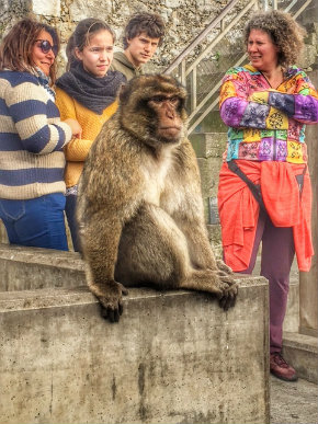 gibraltar monkey-w290.jpg