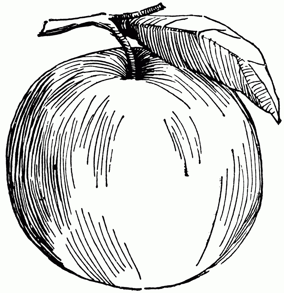 Apple Fruit Drawing Apple Clipart Etc Clipart Best Clipart Best