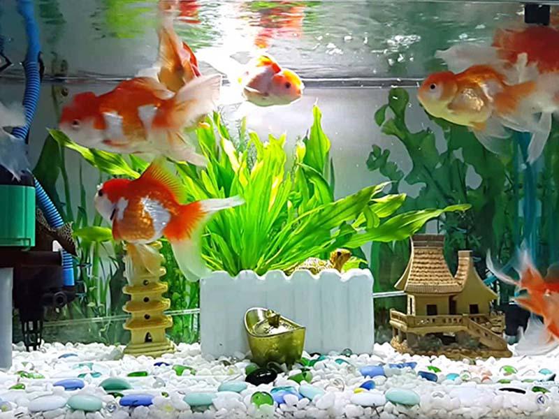 Đặt đồ phong thủy có nước trong nhà