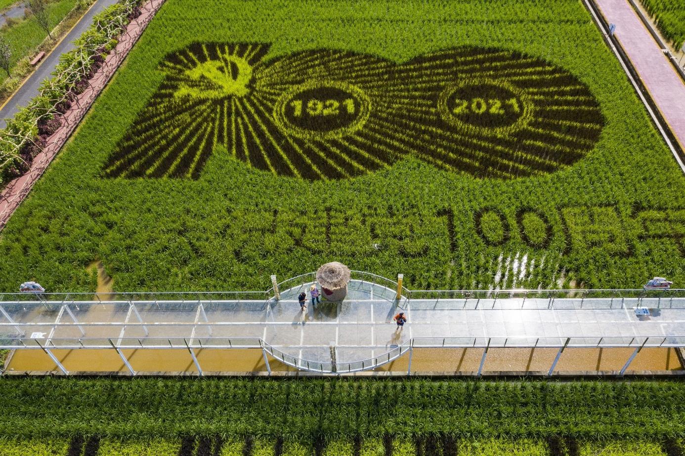 Afbeelding met gras  Automatisch gegenereerde beschrijving