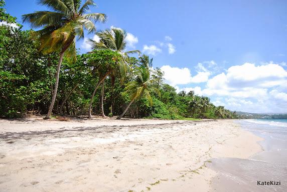 Пальмовый и мангровый лес отделяют море от дороги и дают необходимую в такую жару тень