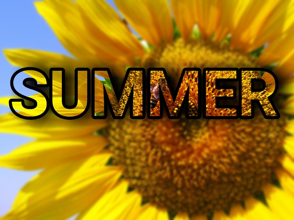 Free illustration: Summer, Sun Flower, Flower, Plant - Free Image ...