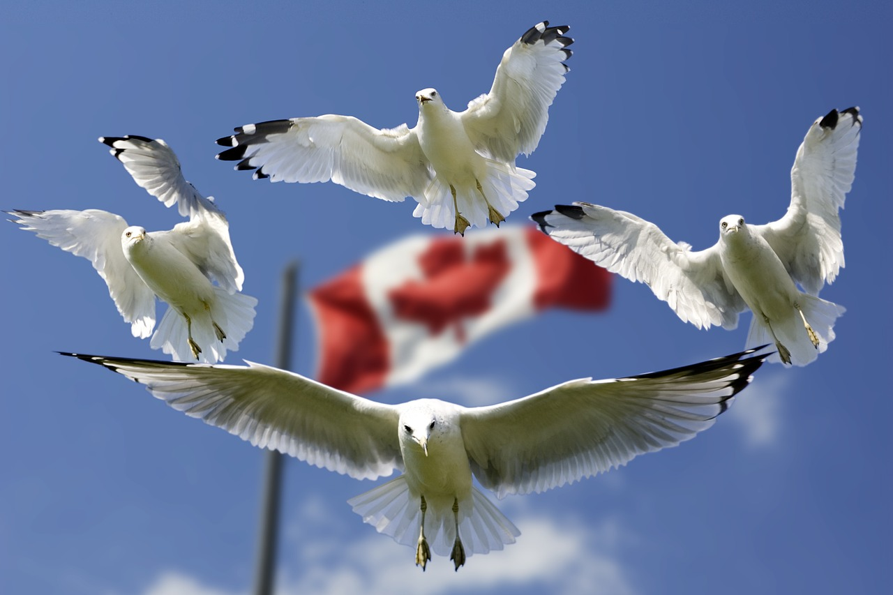 Americans Are Trying To Immigrate To Canada, Here's What They Can Look Forward To