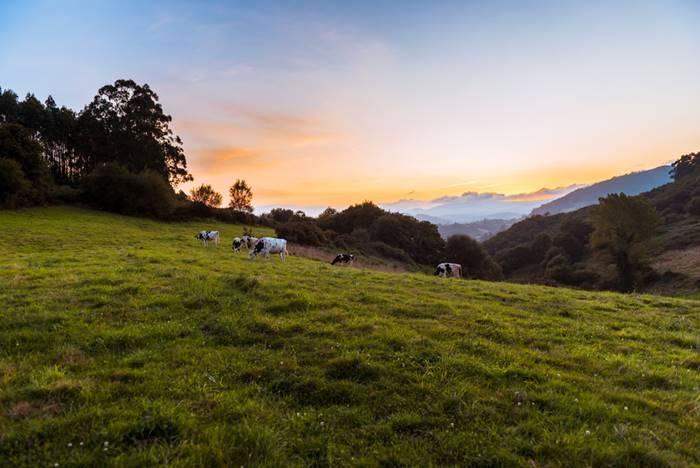 Iniciativas do setor tem ajudado a tornar a pecuária mais sustentável. (Fonte: Shutterstock)