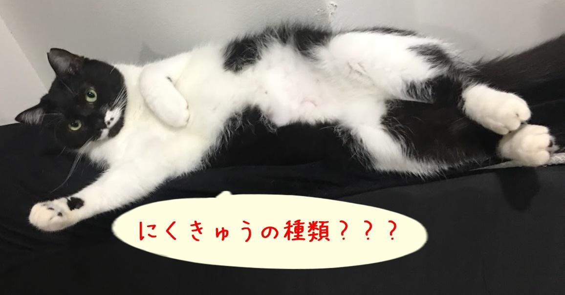 肉球の種類は意外と多い。猫の肉球の色とその役割
