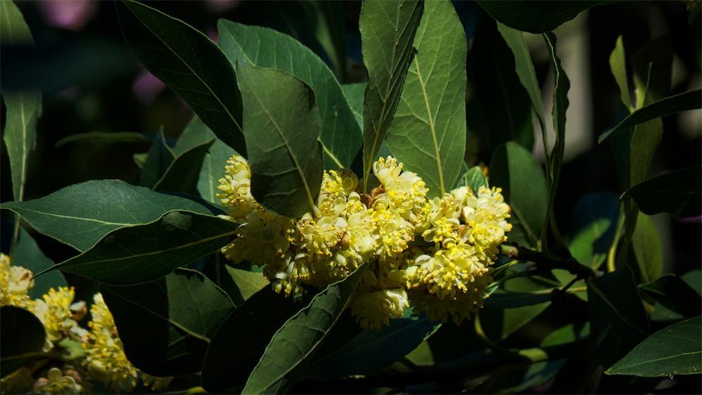 Blooming Treeflower 2.jpg