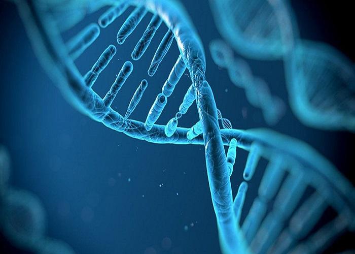 Gen di truyền