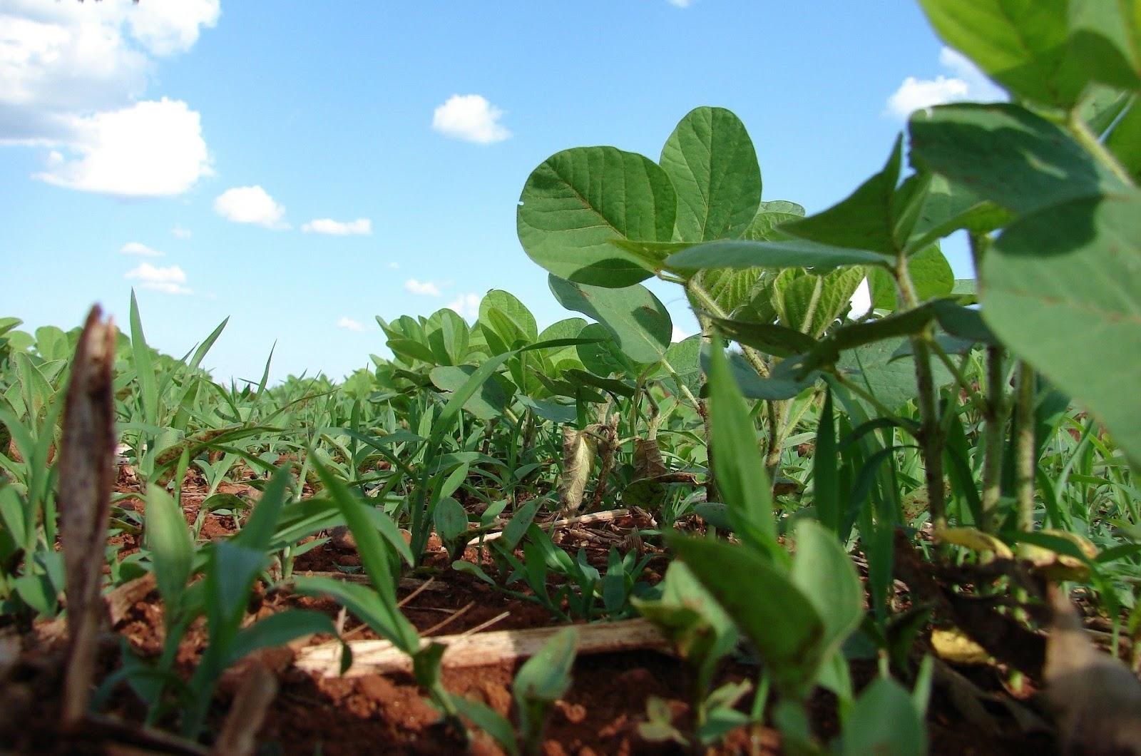 Organizações responsáveis já promovem iniciativas para a redução de carbono no Brasil. (Fonte: Pixabay)