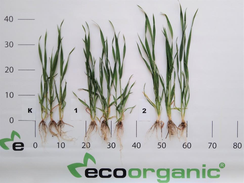 ecoorganic-osyma
