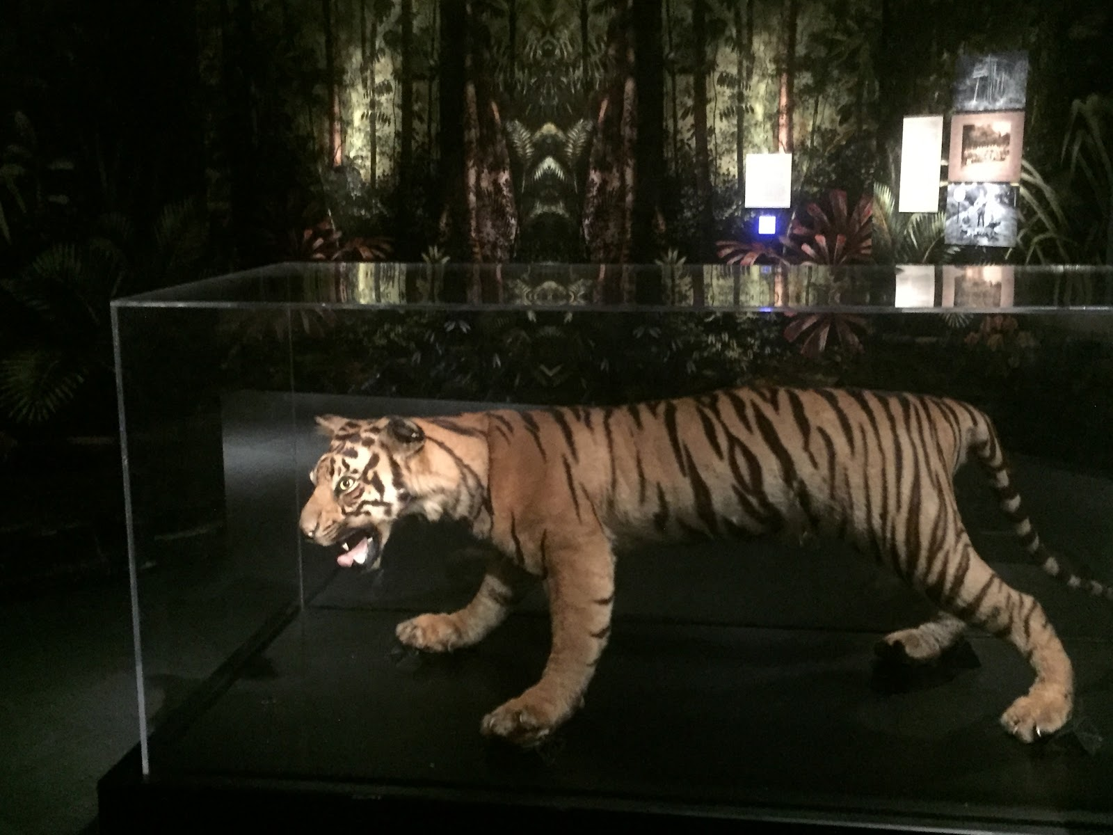 Pose with a lifelike taxidermied tiger!
