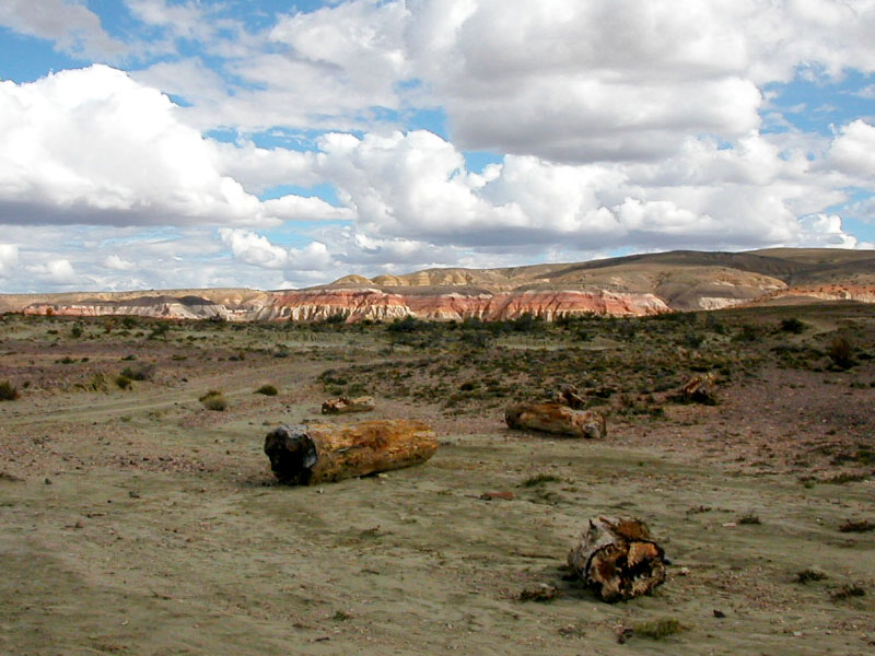The Petrified Forests in Chubut (Dr. Wilf scientific approach)