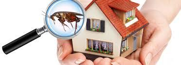 Why Is Pest Control Done by Professionals Better Than Your DIY's?