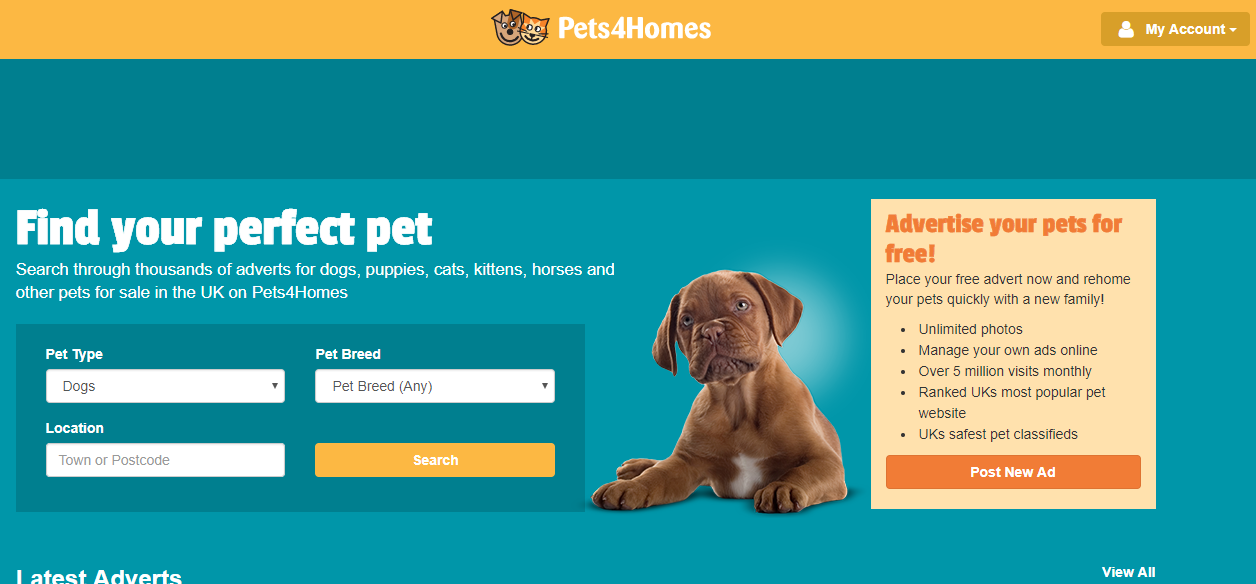 Where to find and buy a dog online? Best options in 1 place