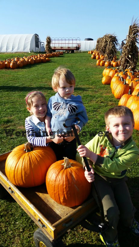 Kids Pumkins 2014 WM.jpg