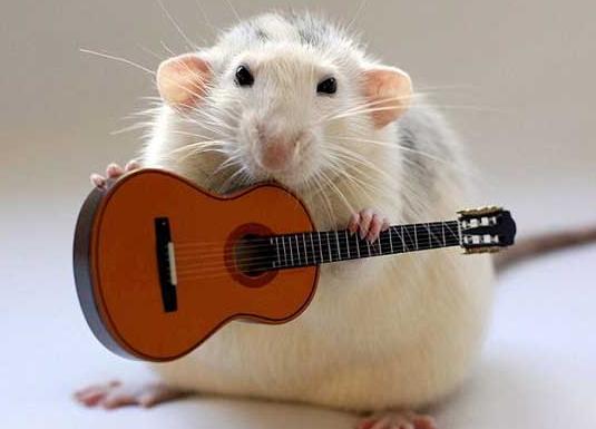 Nhìn thấy chuột trong mơ
