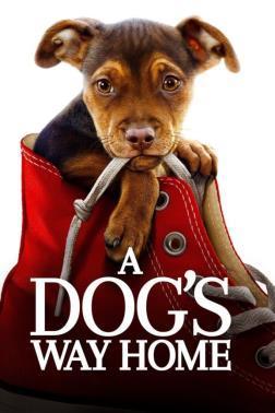 F:\DOCUMENT\cellcom\תמונות\סלקום טיוי\ניוזלטר דצמבר\פוסטרים\A_Dog's_Way_Home_POSTER.jpg