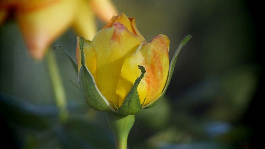 Multi Hue Yellow c.jpg