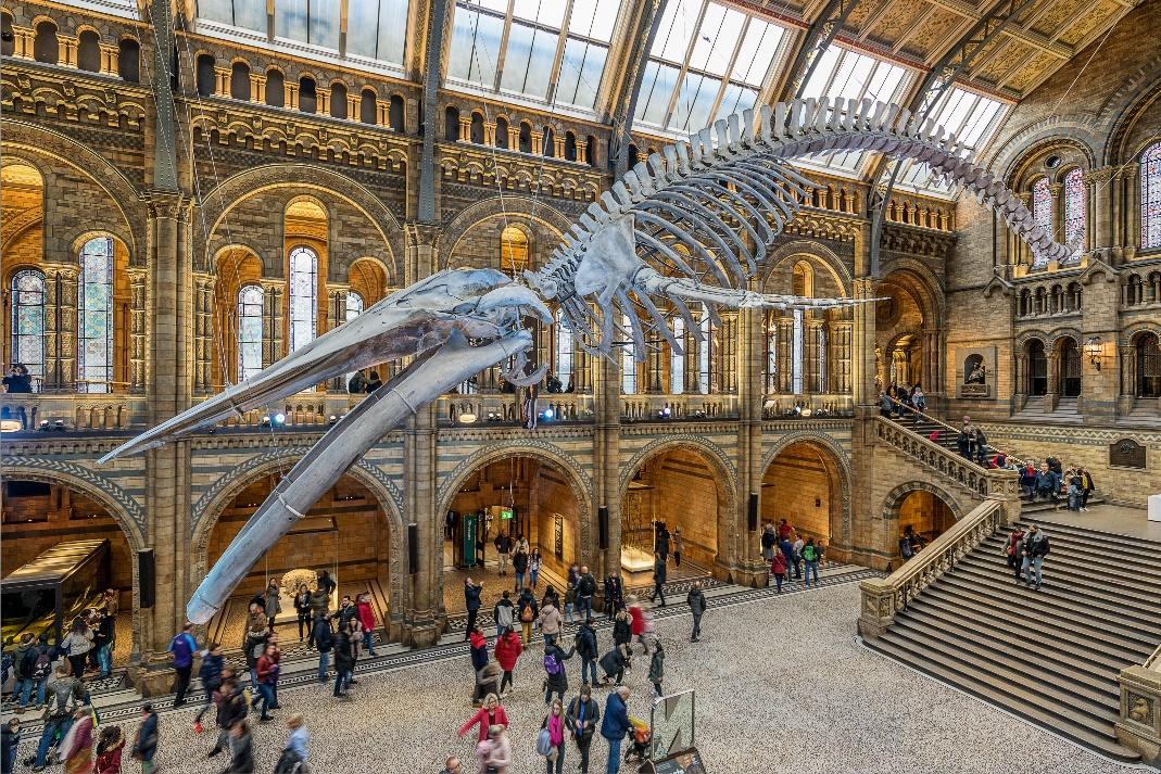 Dinosaur skeleton at the Natural History Museum, London