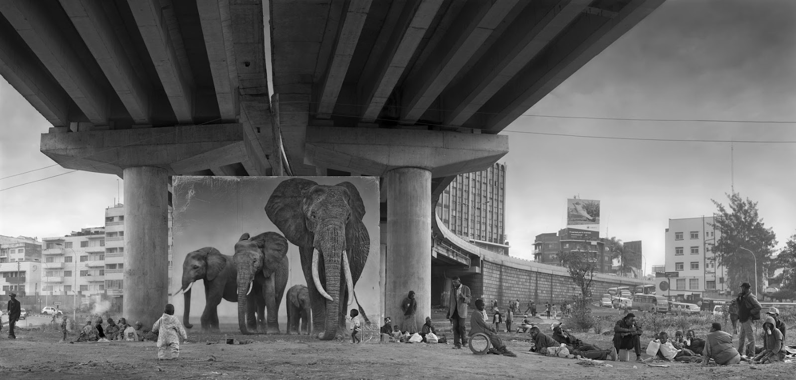 UNDERPASS-WITH-ELEPHANTS.jpg