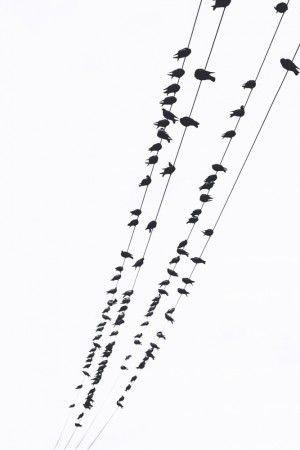 عکس پرندگان روی تیر برق