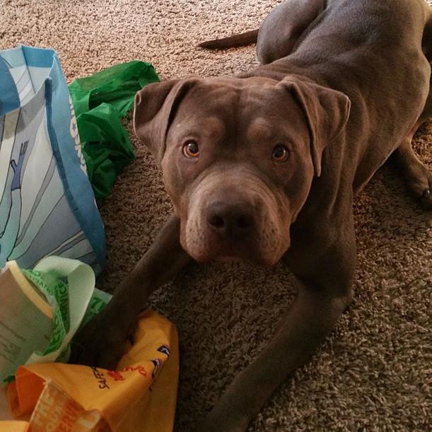 Descubre lo que este maravilloso perro logró hacer por un niño con autismo