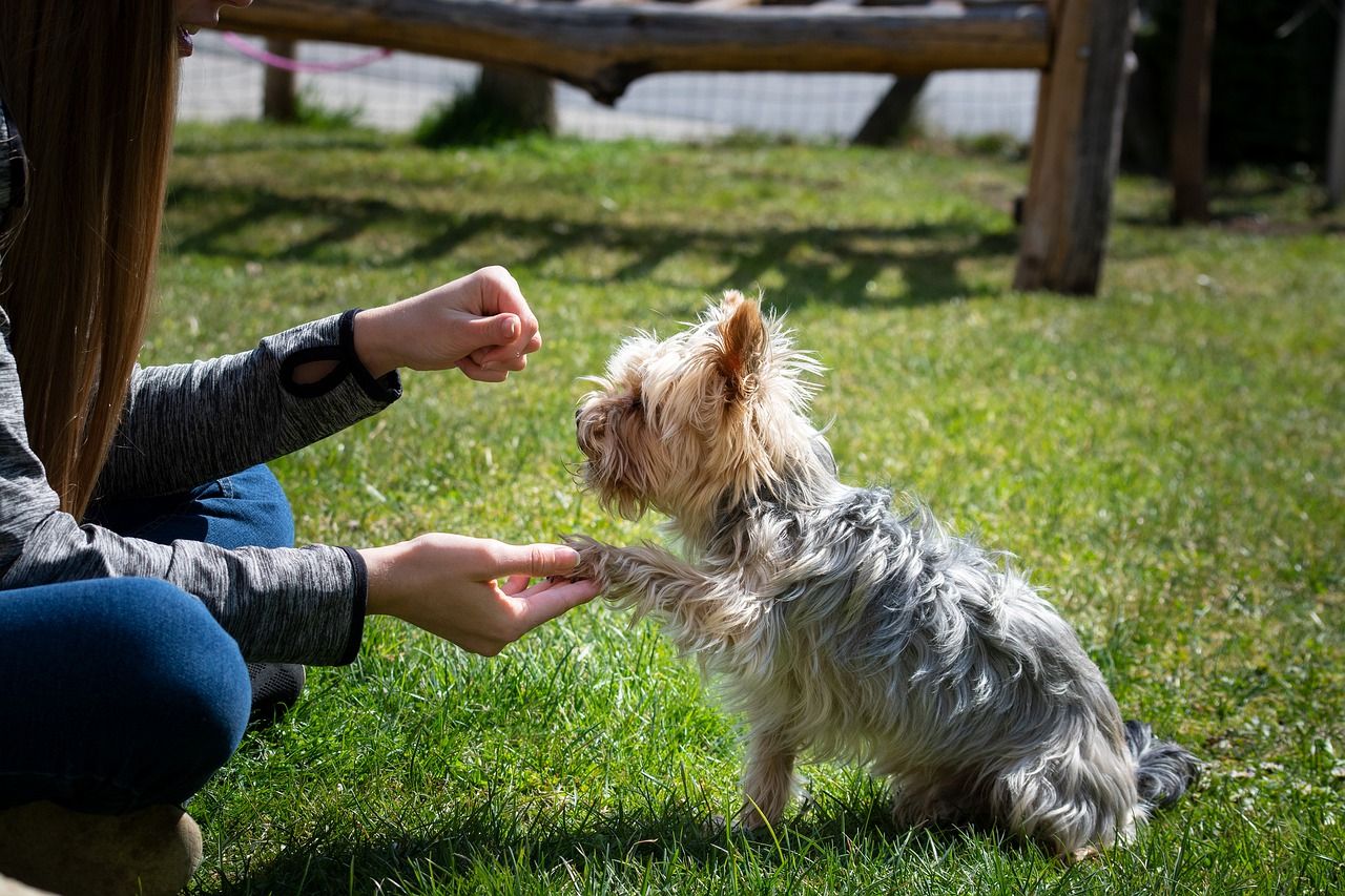 Woman training her dog   what makes a good trainer