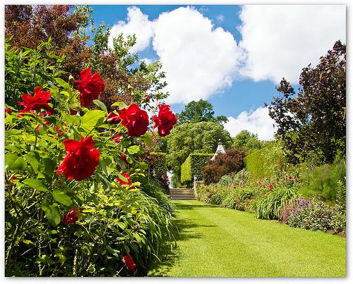 Как сделать удачные фотографии сада