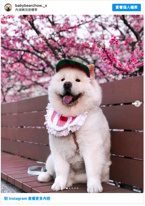 2021 台北賞花,內湖樂活夜櫻季