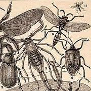 Сон про таракана