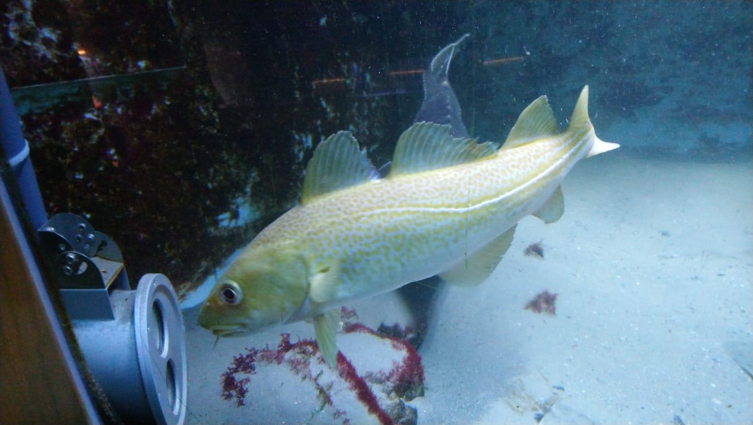 Fische im Livestream vor der Unterwasser-Cam