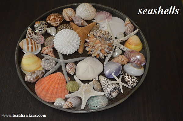 seashells from the art of simple