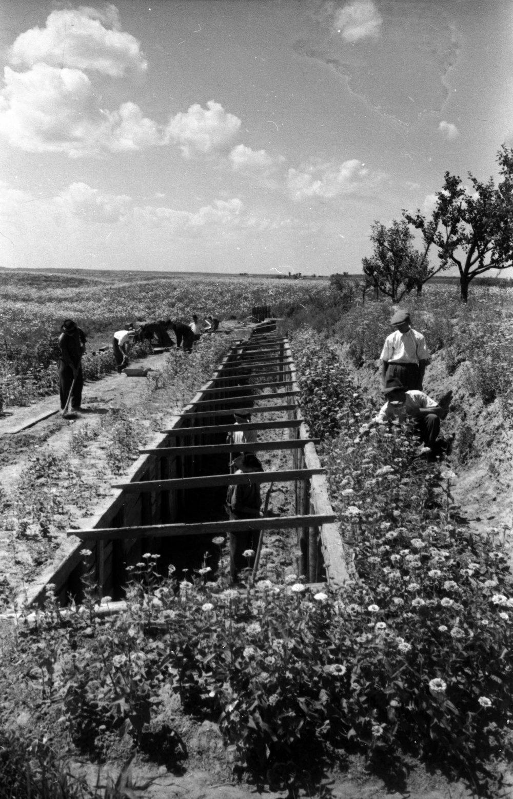 Строительство траншей для цитрусовых в колхозе им. Ленина в Мукачевском районе Закарпатской области