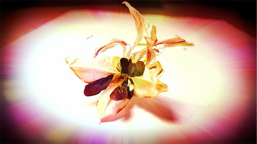 Fun Photo Seed Pod Photo.jpg