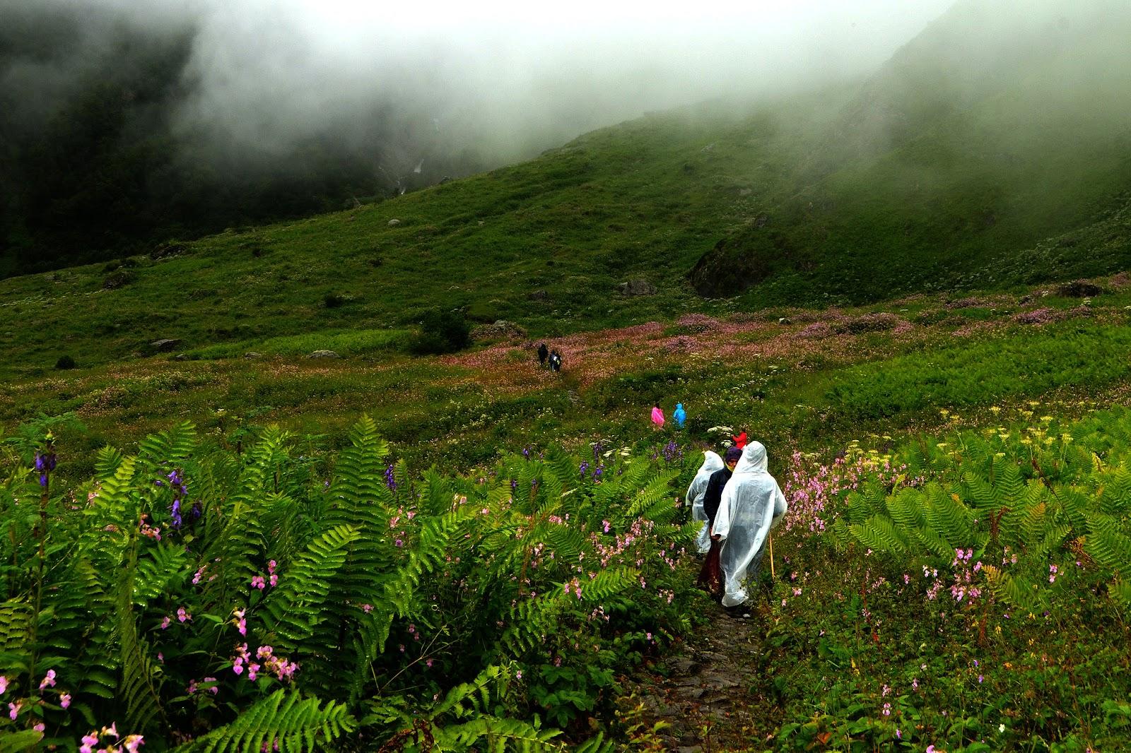 savaari-valley-of-flowers-uttarakhand